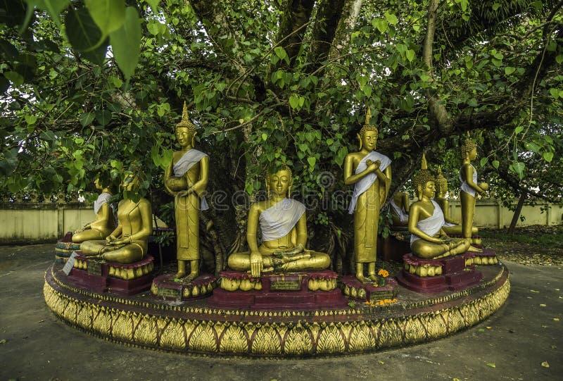 Statues de Bouddha pendant sept jours photos libres de droits