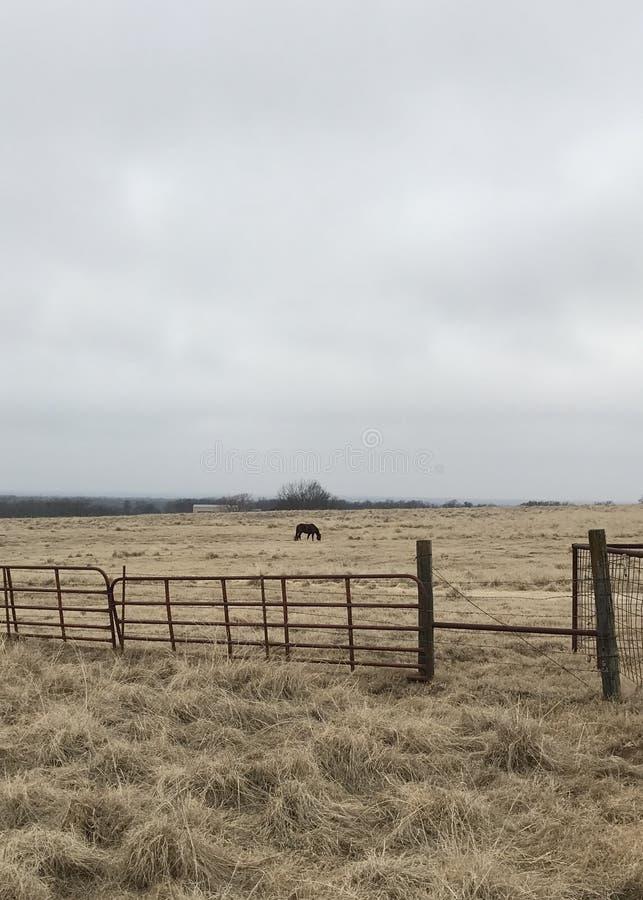 Status alleen op de Prairie van Oklahoma royalty-vrije stock fotografie