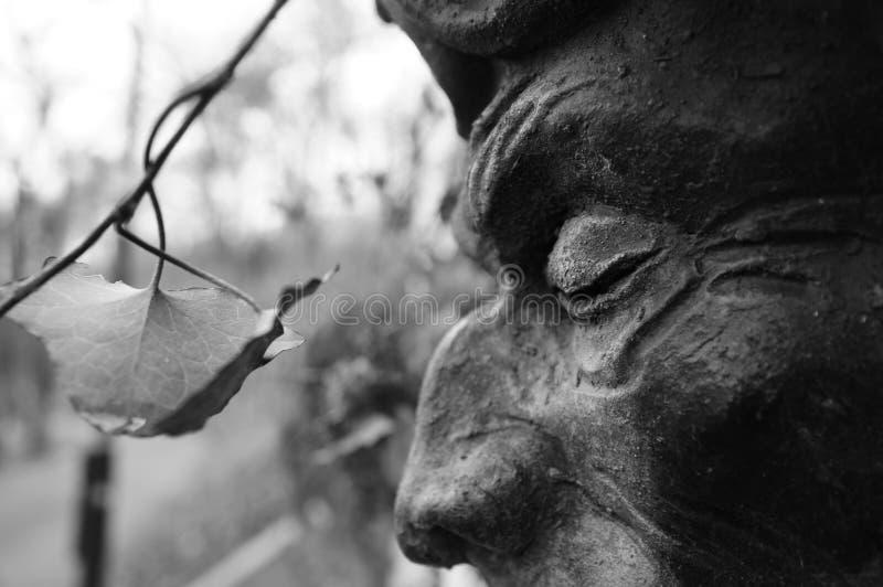 Statyöga som stirrar på bladet royaltyfri foto