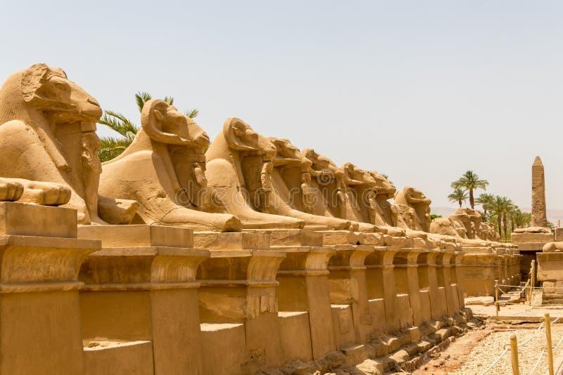 Statyer i gränden av Ram Headed Sphinxes på templet av Karnak i Luxor, Egypten arkivbild