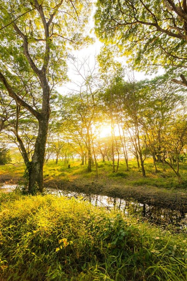 Stauen Sie den tiefgr?nen Wald und den Sonnenuntergang, Sonnenaufgang Nat?rlicher Hintergrund lizenzfreies stockbild