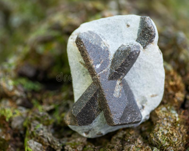 Staurolite - Fairy cross from Semiostrovye, Western Keivy, Kola Peninsula, Russia. On a tree bark in the forest. Nesosili royalty free stock photo