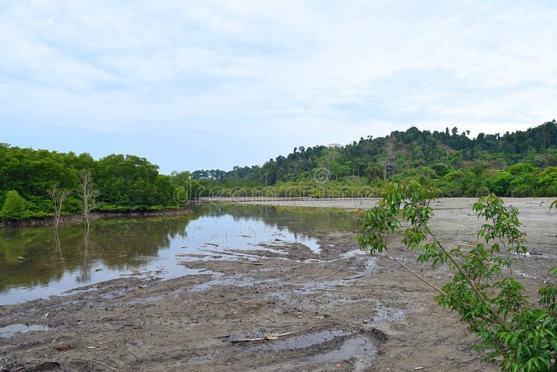Stauwasser, Mangroven-Wald und klarer blauer Himmel - Baratang-Insel, Andaman Nicobar, Indien stockfotos