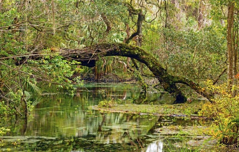 Stauwasser Slough im tiefen Süden stockbilder