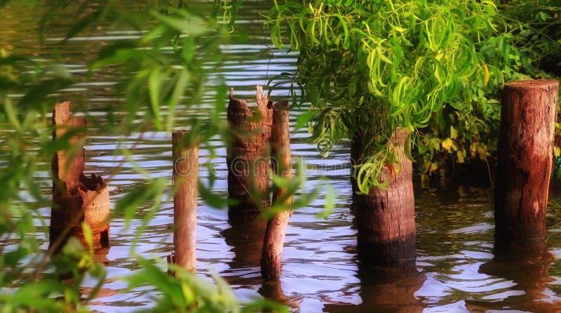 Stauwasserkokosnussbäume lizenzfreie stockfotografie