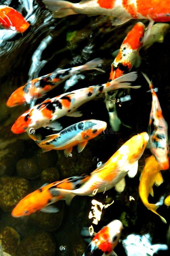 staw ryb zdjęcie stock