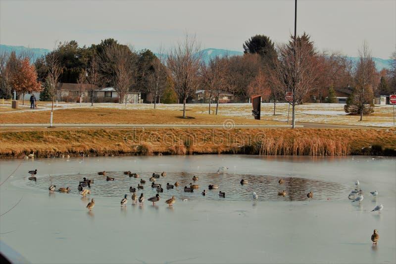 Staw wśród stawu przy Julius M Kleiner pamiątkowy park w Boise Idaho zdjęcie royalty free