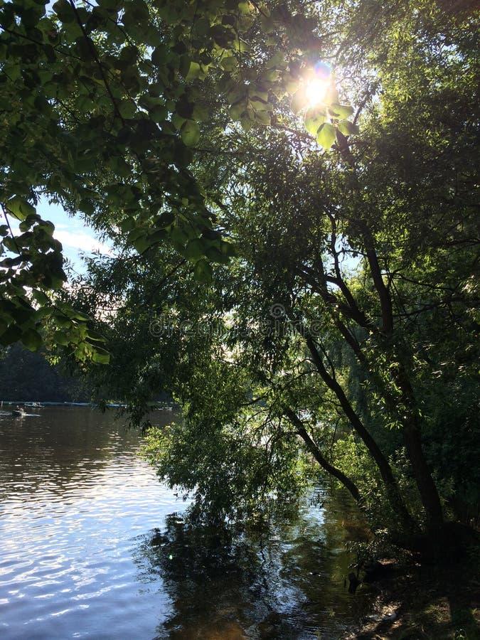 Staw w cieniu drzewa w parku fotografia stock