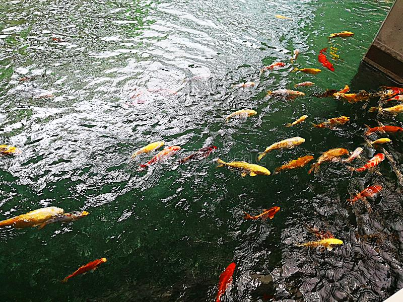 Staw z kolorową rybą zdjęcia royalty free