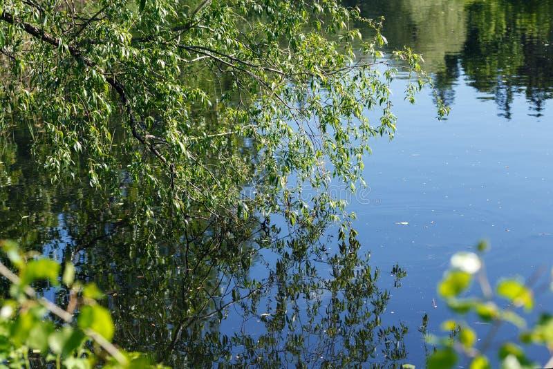 Staw z odbiciami drzewa i niebo w spokój wodzie ukazujemy się Piękny pogodny ogród, zieleni drzewa, spokojny staw obrazy stock
