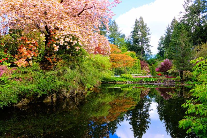Staw z piękny kwiatonośny wiosen drzew otaczać zdjęcie stock
