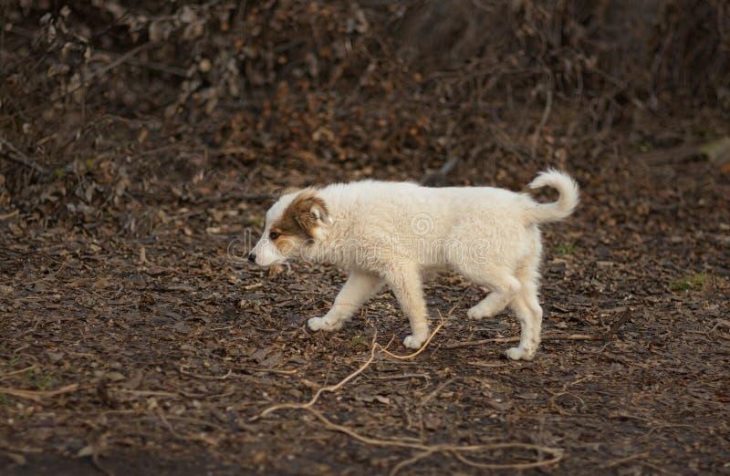 Stawia czoło przybłąkanego szczeniaka w poszukiwaniu mamy obrazy stock
