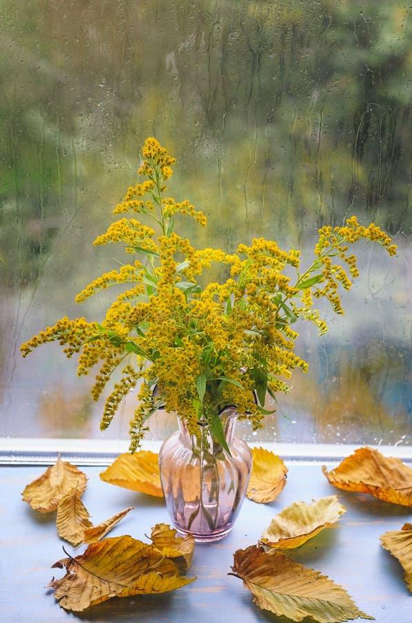 Stawiający czoło kanadyjczyk w wazie, kolor żółty opuszcza obraz stock