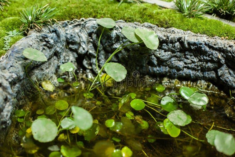 Stawowe algi zdjęcie stock
