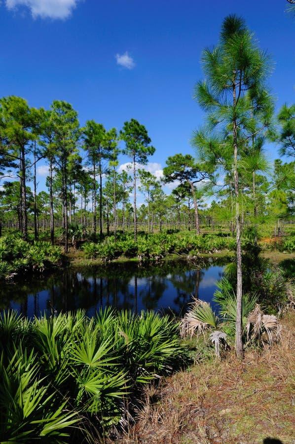 stawowy pionowo las obrazy stock