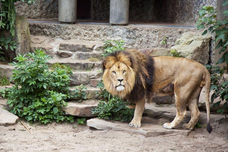Download Stay alert stock image. Image of country, habitat, safari - 25565323