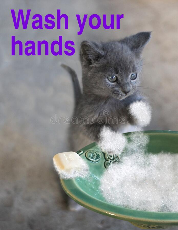 Staying Healthy - Cat Reminder - Wash your Hands. A little grey kitten reminds everyone to wash your hands.  A gentle reminder of how to stay healthy and not stock photography