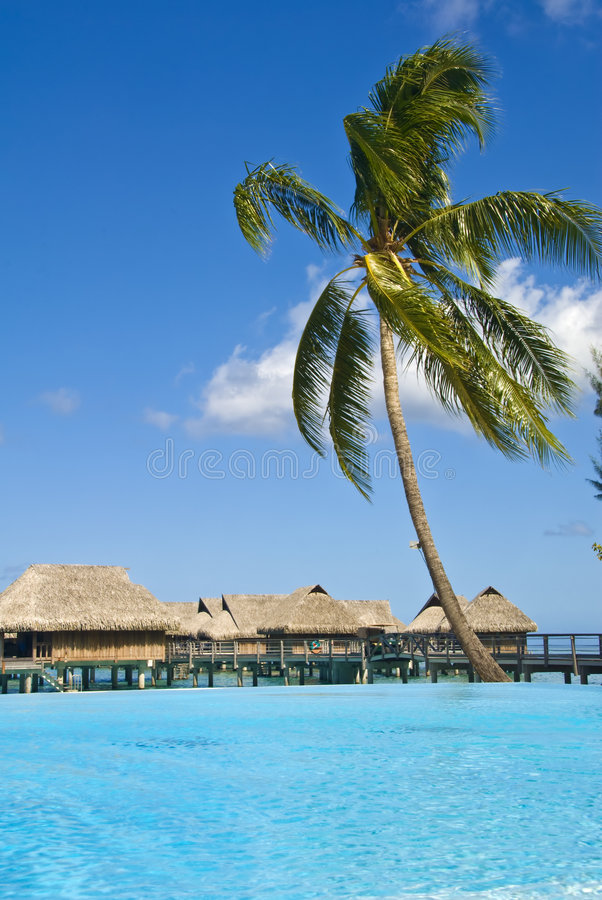 Stazione balneare tropicale sul moorea in mari del sud fotografia stock