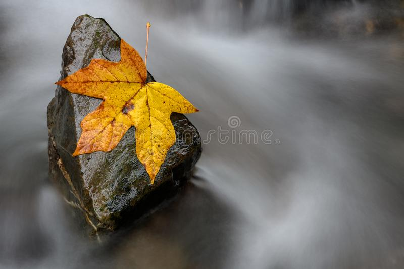 A steady rock helps a single fall leaf stand against the backwash. Stronger together or nothing is impossible concept. A steady rock helps a single fall leaf royalty free stock photography
