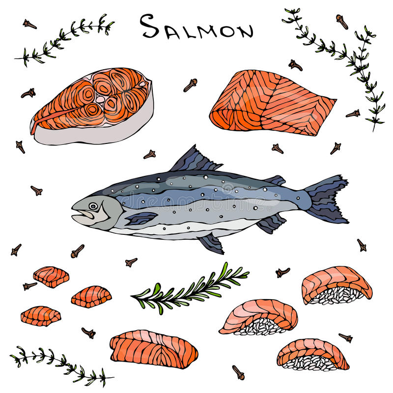 Steak, Filet, Slices and Sushi of Red Fish Salmon for Seafood Menu. Vector Illustration Isolated On a White Background vector illustration
