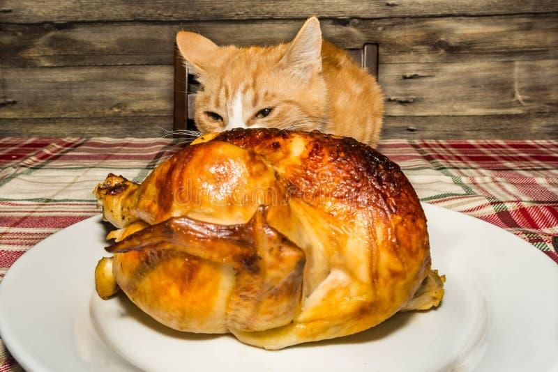 Stealing γεύμα διακοπών γατακιών στοκ φωτογραφία