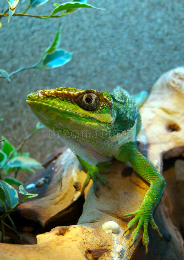 Download Stealing Anole stock image. Image of steal, beast, monster - 1460053