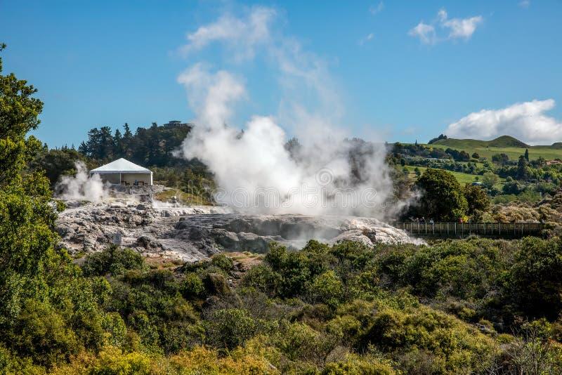The steam of the geothermal hot springs at Whakarewarewa, The Living Maori Village set in the geothermal region of Rotorua. royalty free stock images