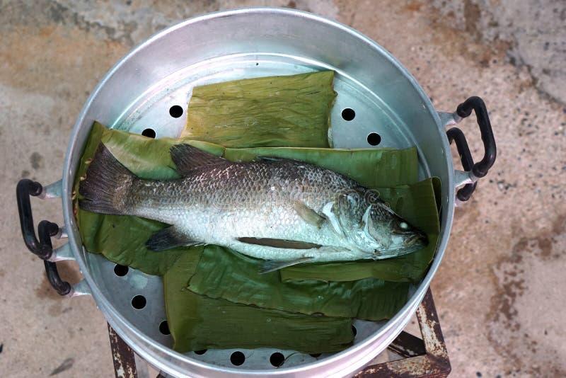 Steam sea bass fish royalty free stock photo