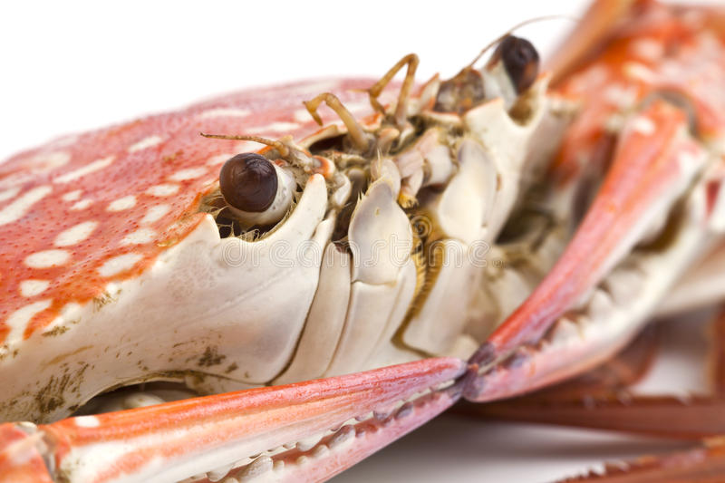 Download Steamed crab stock image. Image of restaurant, gourmet - 26078157