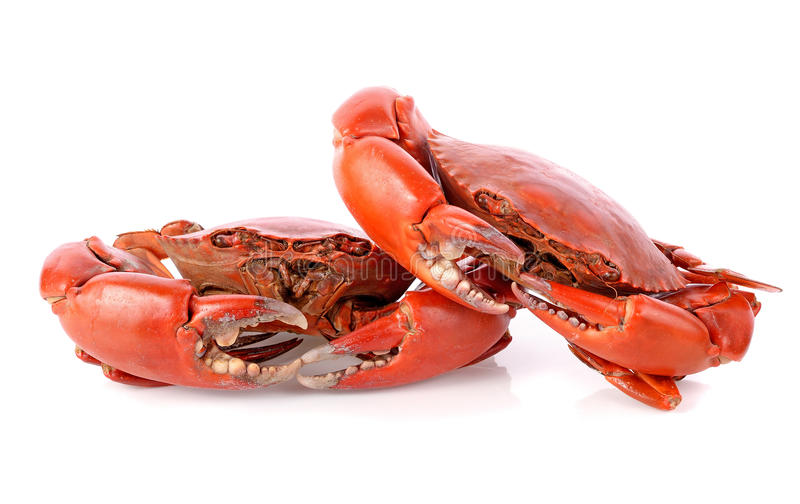 Steamed crab. Isolated on white background royalty free stock photos