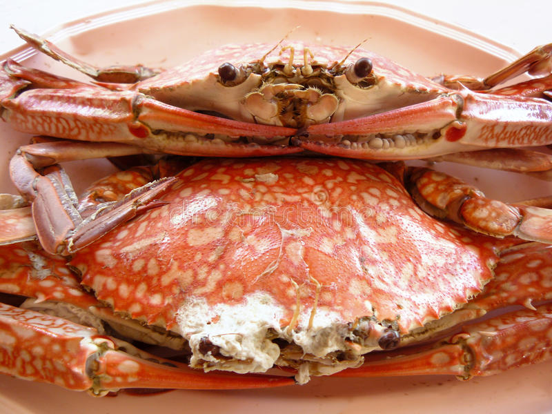 Steamed crab on a plate stock photos