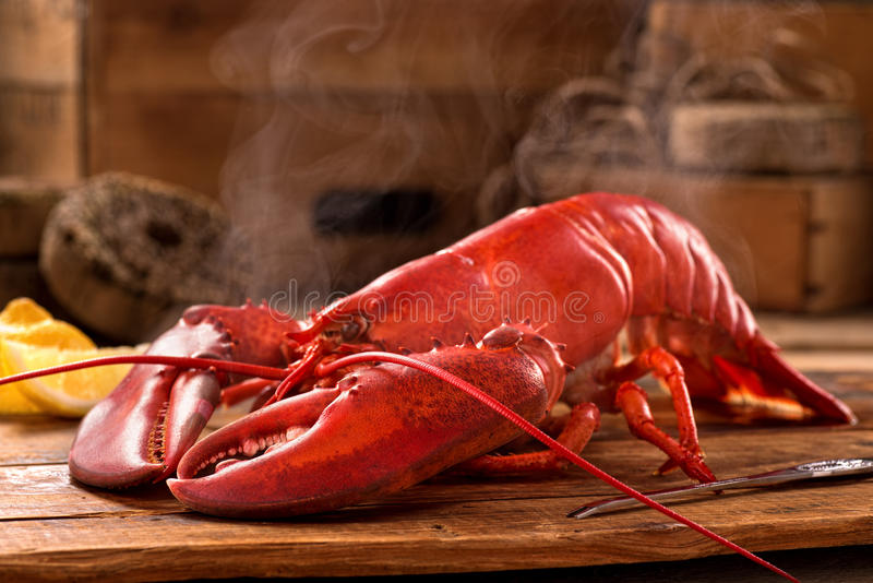 Steamed Lobster. A delicious freshly steamed lobster in the rough stock photo