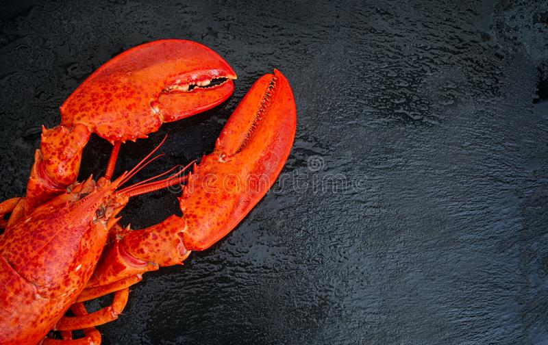 Steamed lobster seafood royalty free stock photo