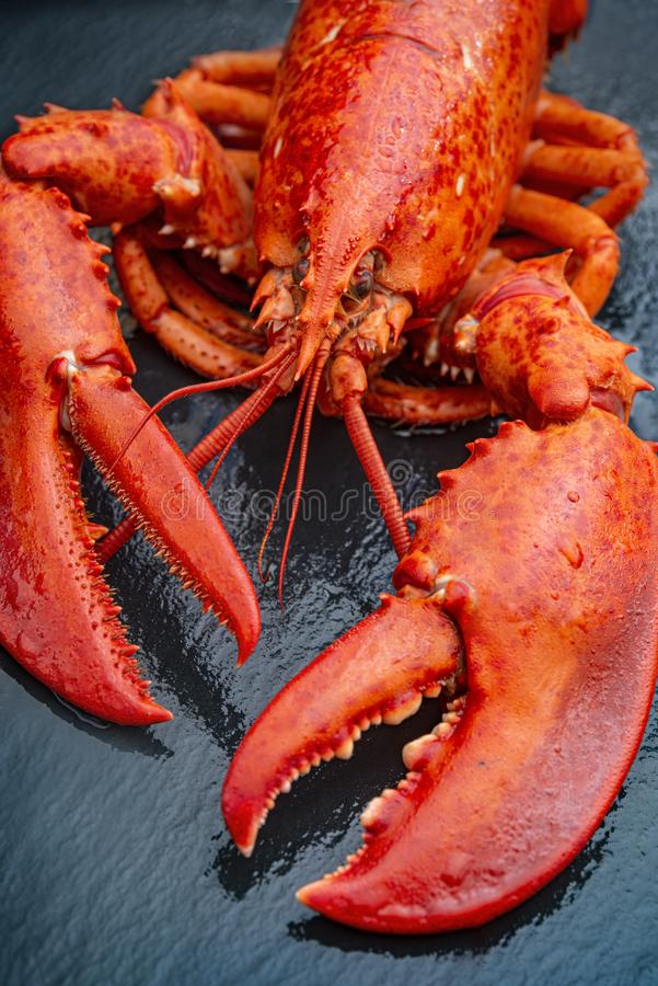 Steamed lobster seafood stock image