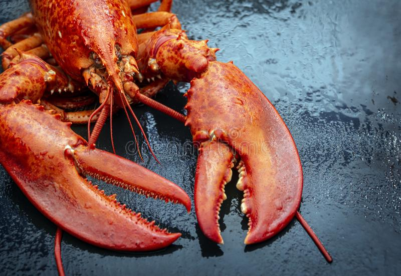 Steamed lobster seafood royalty free stock images