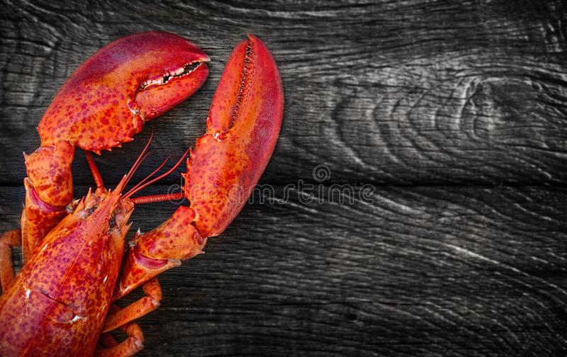 Steamed lobster seafood royalty free stock image