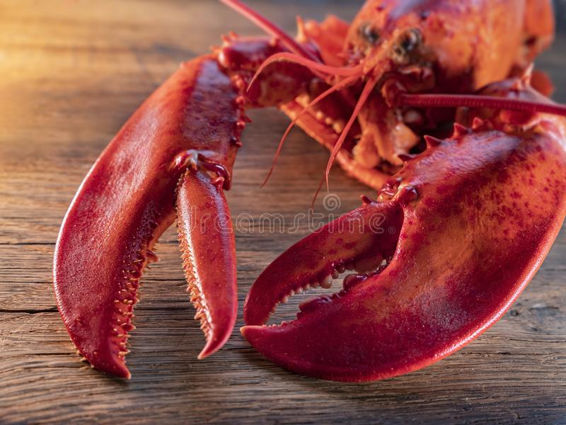 Steamed lobster seafood stock photo