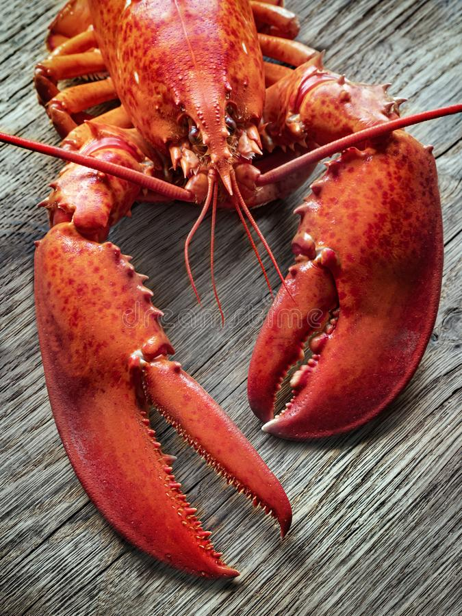 Steamed lobster seafood. On wood background royalty free stock photography