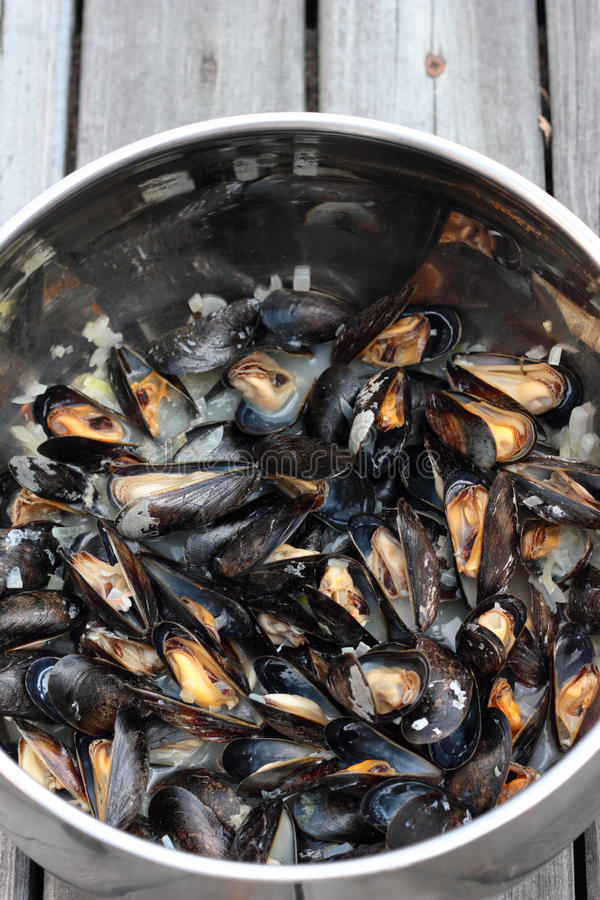 Steamed mussels. royalty free stock images