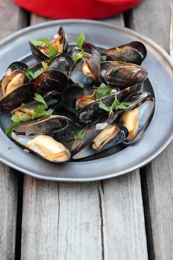 Steamed mussels. royalty free stock photography