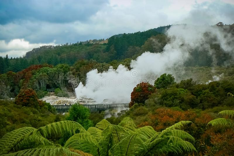 Steaming geyser at Te Puia geothermal park, Rotorua, New Zealand. Geyser activity and steam vents at Te Puia geothermal park, Rotorua, North Island, New Zealand royalty free stock images