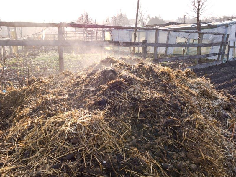 Steaming manure heap stock image