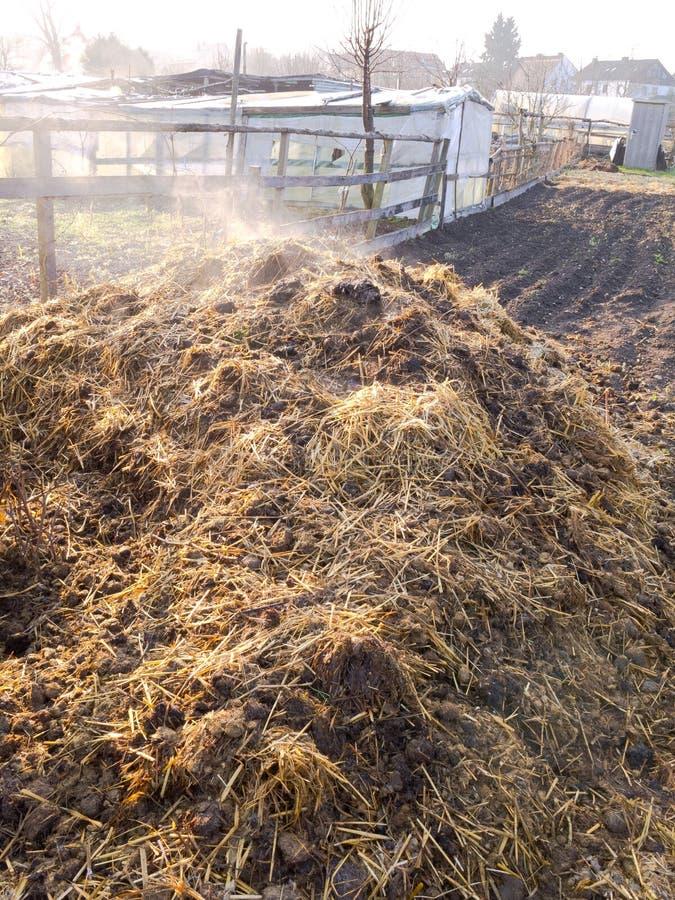 Steaming manure heap royalty free stock image