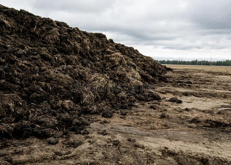 Steaming pile of manure on farm field in Dutch countryside royalty free stock image