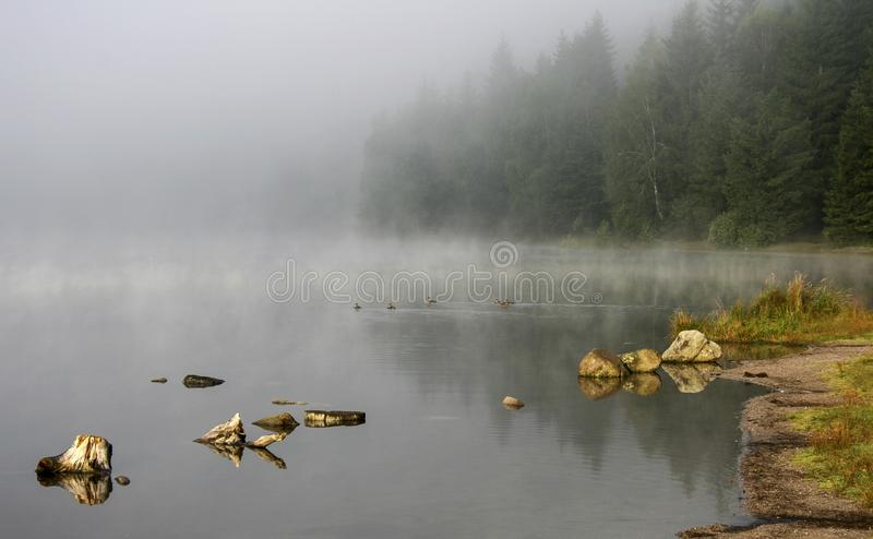 Steamy lake and misty forest stock photo