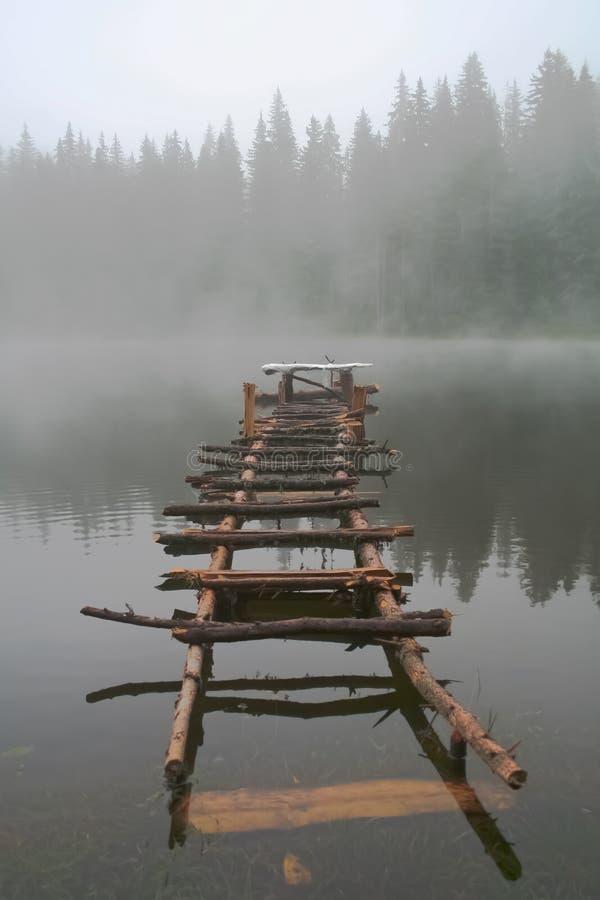 Stear im Wasser lizenzfreies stockfoto