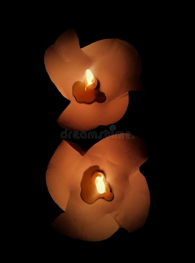 stearinljus i pappers- blomma royaltyfri foto