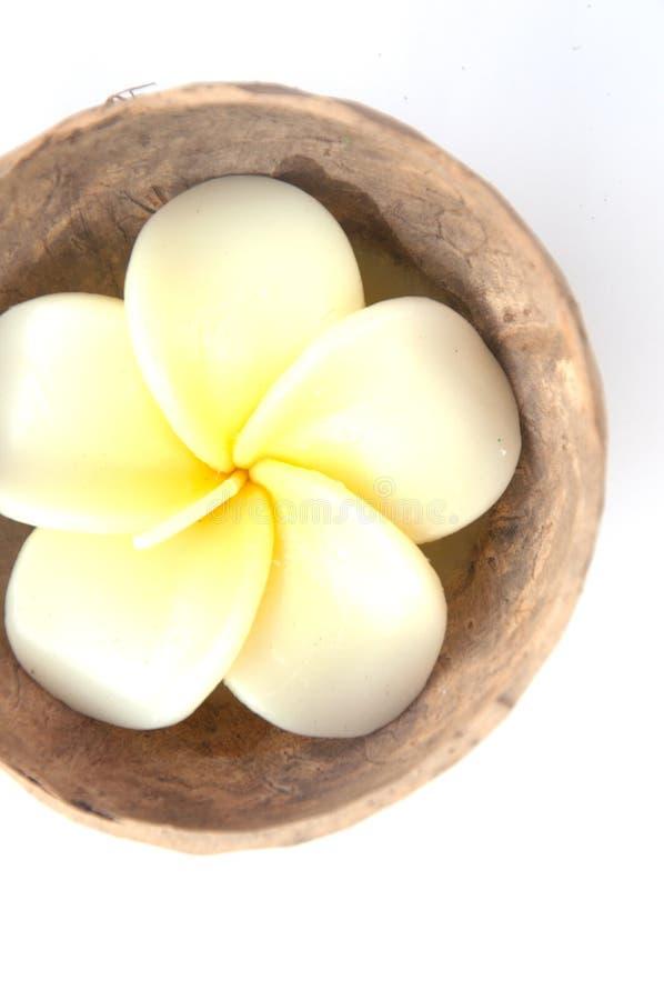Stearinljusblomma - Frangipani (plumeria) i kokosnötskal royaltyfria bilder