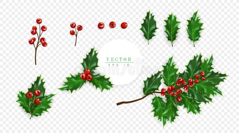 Stechpalmenbeerensatz, das Symbol von Weihnachten lokalisiert auf transparentem Hintergrund, kann für Dekoration von Grußkarten b vektor abbildung