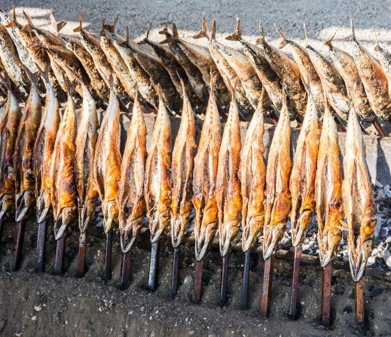 Steckerfisch стоковое изображение rf